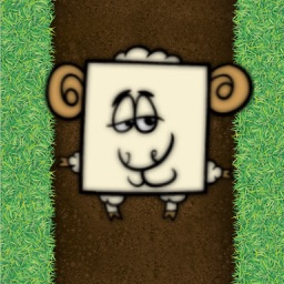 My Funny Sheep
