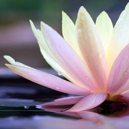 Meditate Me Guided Meditation