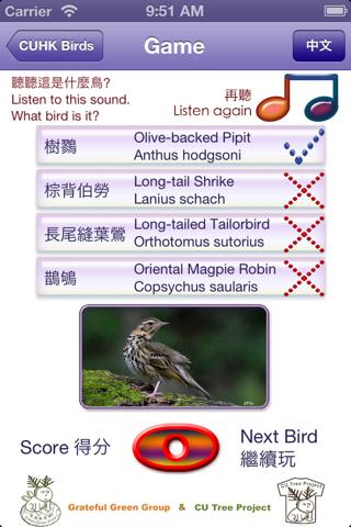 中大鳥  Birds of CUHK - náhled