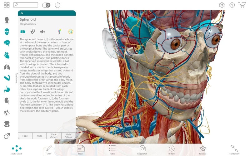 Human Anatomy Atlas 2017 Complete 3d Human Body App Price Drops