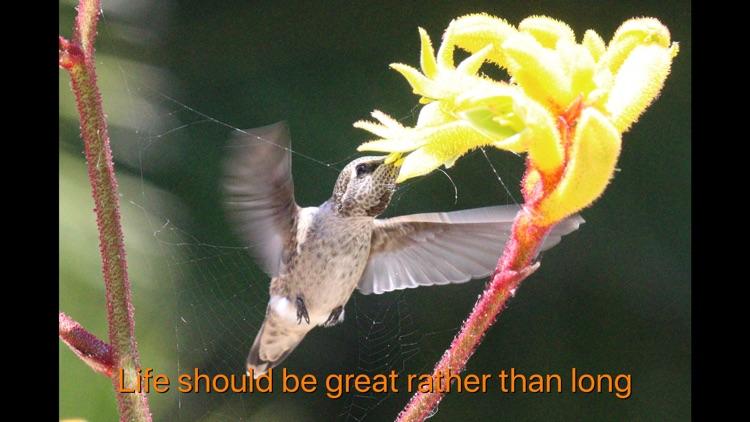 Hummingbird Moments screenshot-3