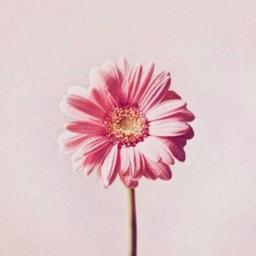 心情物语 - 全新的唯美图片情感语录