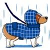 Lovely Welsh Corgi Dog Sticker