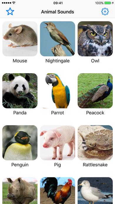 Animal Sounds Voice Simulator Screenshot