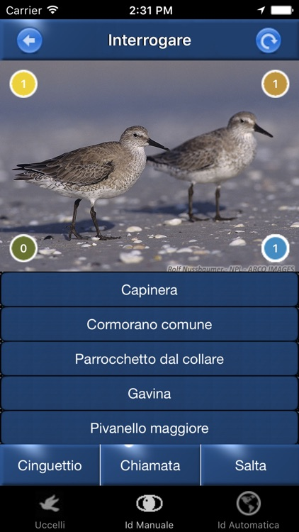Canzoni d'uccelli, versi di richiamo degli uccelli screenshot-4