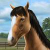 MunkyFun, Inc. - My Horse artwork