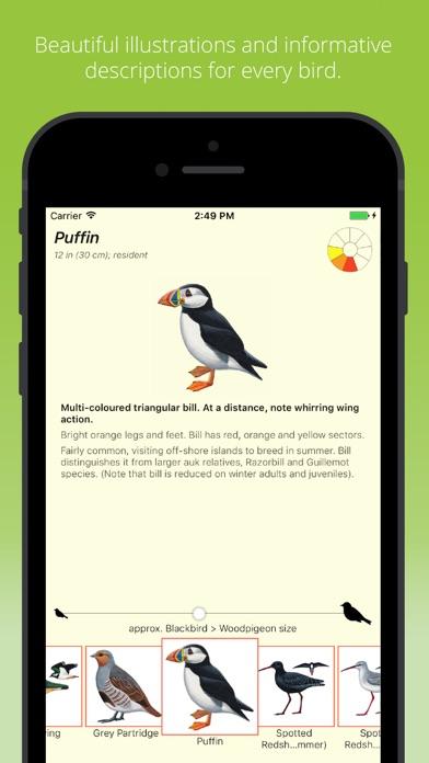 Birds by Colour screenshot three