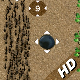 a Ants Army in Sand ! - HD