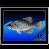 Aquarium 4K - Live Wallpaper