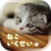 癒しの猫育成ゲーム3D