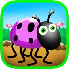 Activities of Little beetle run