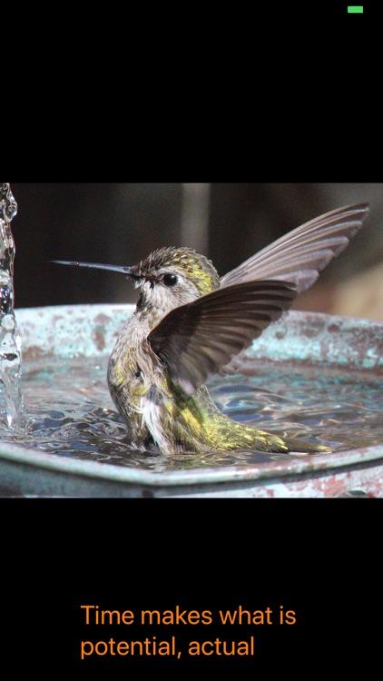 Hummingbird Moments screenshot-5