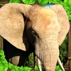 Activities of Elephant Simulator
