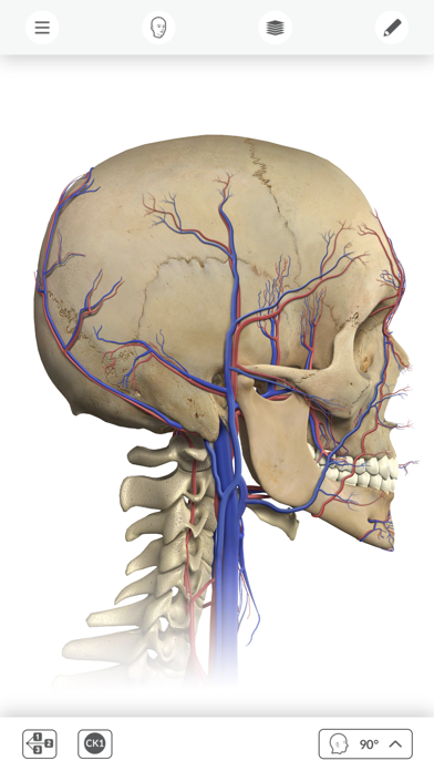Interactive Anatomy - UK & IRE screenshot four
