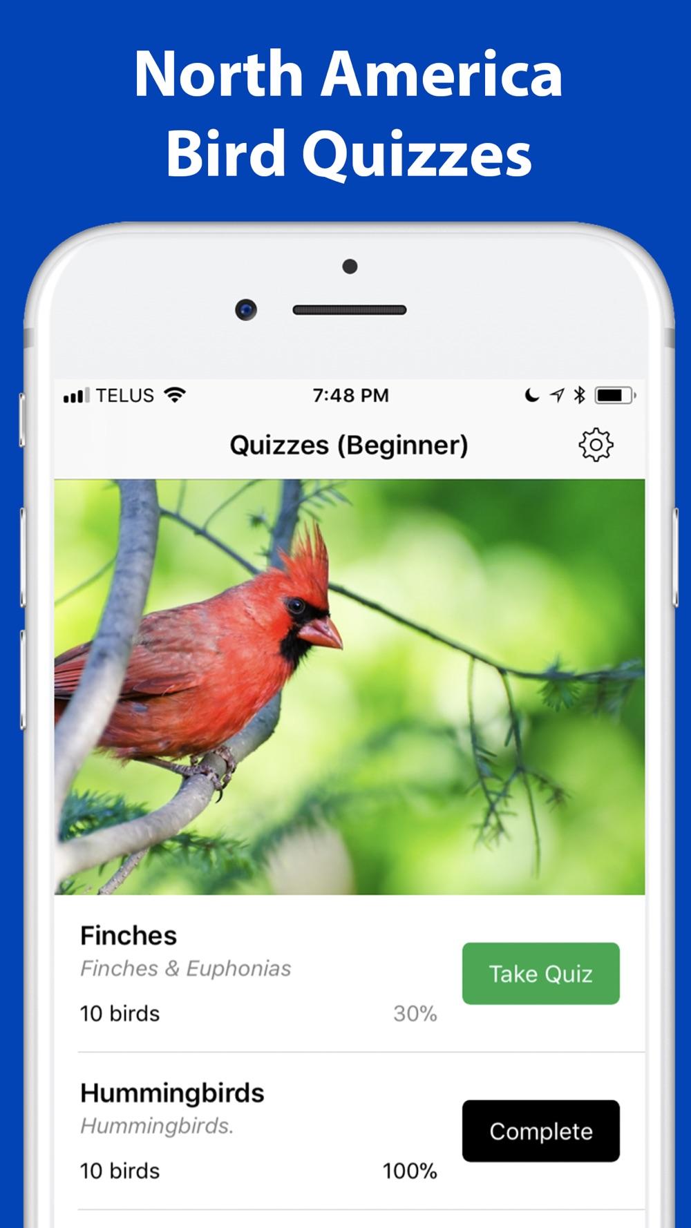 Name the bird! Cheat Codes