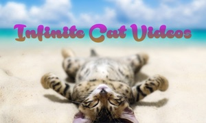 Infinite Cat Videos — Funny Internet Clips