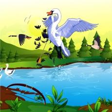 Activities of Bow Bird Hunting