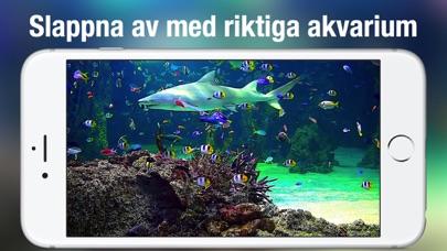 Akvarium Live HD + på PC