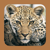 Stuarts' eGuide Mammals 4th Ed