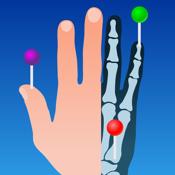 Imaios E Anatomy app review