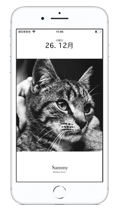 猫のカレンダー2018 ScreenShot0