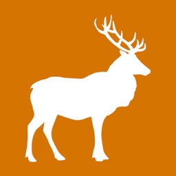 Deer Feeding Times for Hunting