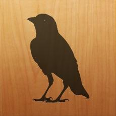 Activities of Blackbird!
