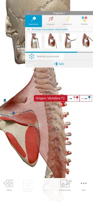Atlas de anatomía humana 2018 12+