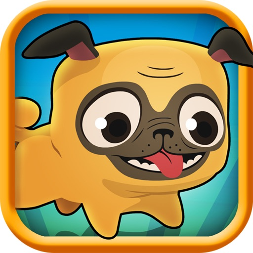 Pug Run Review
