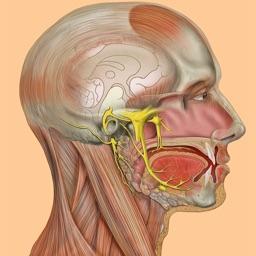 Die Anatomie Quiz