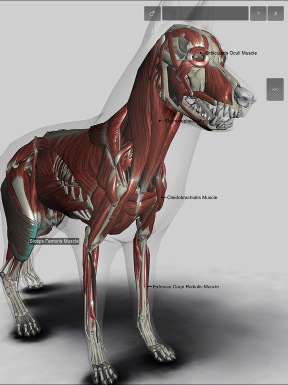 3d Canine Anatomy App Price Drops