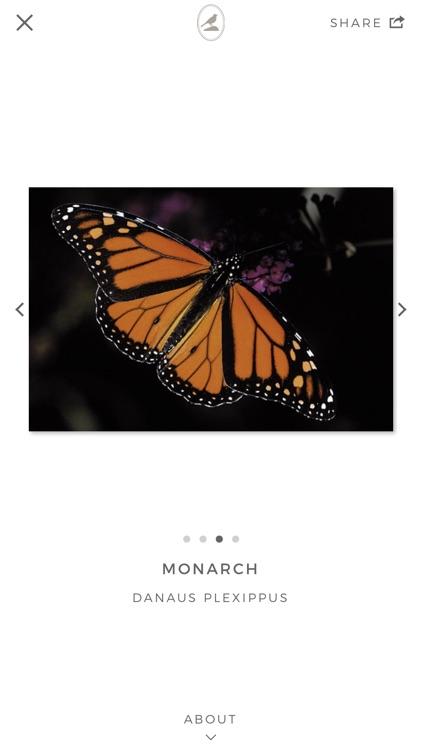Fieldstone Guide: Butterflies screenshot-4