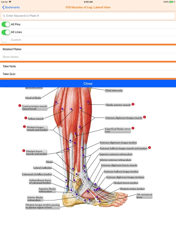 Netter's Anatomy Atlas 7e screenshot 6