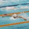 世界游泳赛模拟游戏