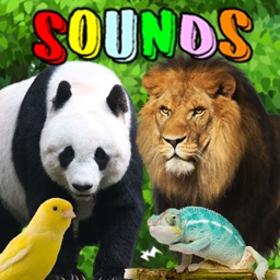 Animal Sounds : Flashcards