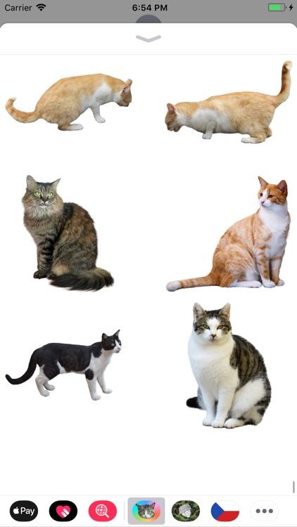 Cat Stickers Meow screenshot-7