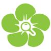 InfoFlowers - Coöperatie InfoFlowersPlants (IFP) U.A.