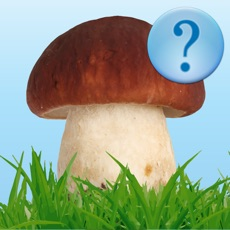 Activities of Guess Mushroom