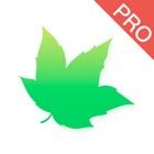 VPN - MapleVPN Pro Ilimitado icon
