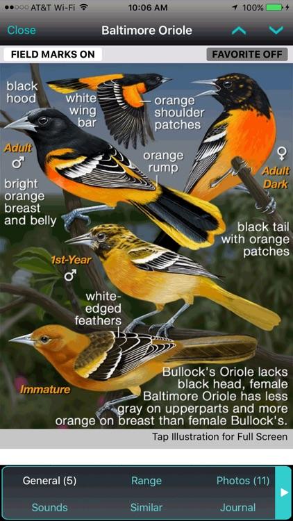 iBird Pro Guide to Birds screenshot-4