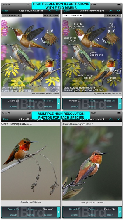 iBird Pro Guide to Birds screenshot-4
