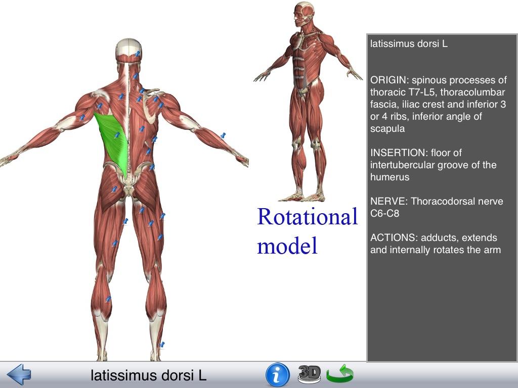 Visual Anatomy Lite - Online Game Hack and Cheat | Gehack com