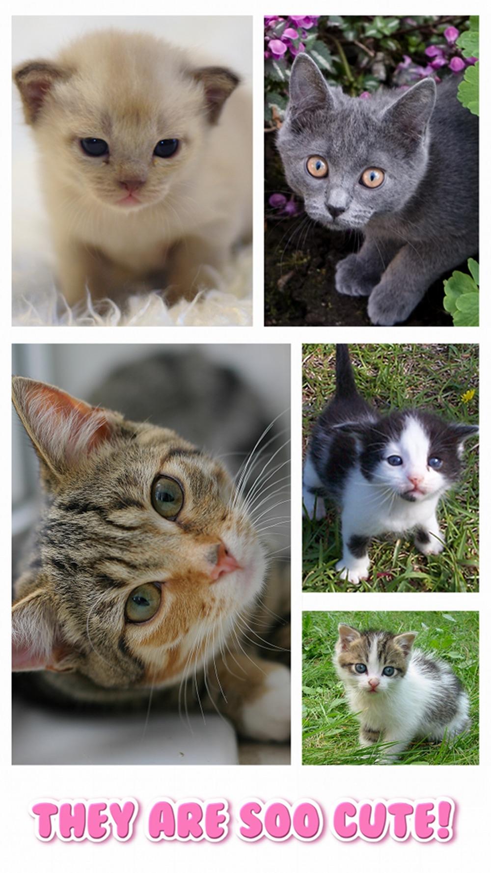 Cat Kitten Jigsaw Puzzle Games hack tool