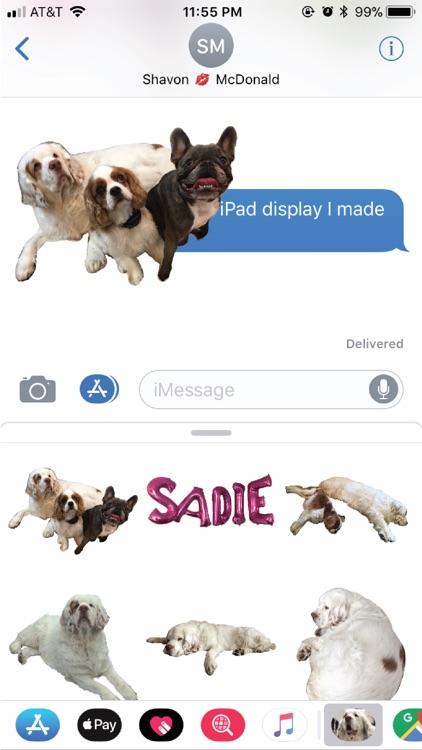 Sadie Bear
