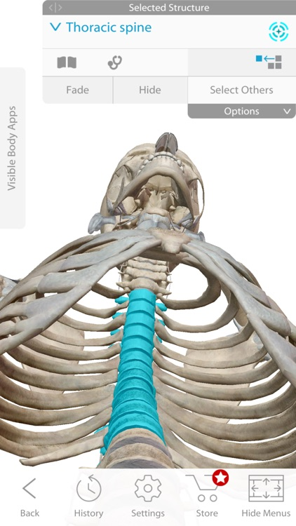 Skeleton Anatomy Atlas: Essential Reference screenshot-2