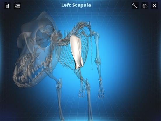 Bone Viewer - Dog Skeleton   App Price Drops