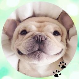 Bulldog! Stickers