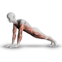 Plank - 30 Days of Challenge for Killer Body