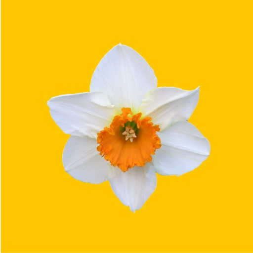 Daffodil Sticker Pack