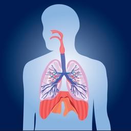 Respiratory System Biology